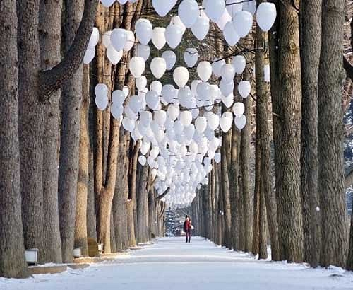 [Dec 7-Mar 24] Nami Island & Petite France & Garden of Morning Calm Shuttle One day Tour_1