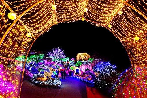 [Dec 5-Mar 24] Nami Island & Petite France & Garden of Morning Calm Shuttle One day Tour_9