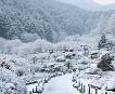 [Dec 5-Mar 24] Nami Island & Petite France & Garden of Morning Calm Shuttle One day Tour_thumb_4