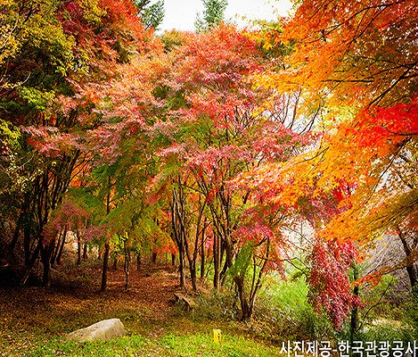[Oct 25 - Nov 8] [From Busan] Autumn Foliage Mountain One Day Tour_3