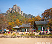 [Oct 25 - Nov 8] [From Busan] Autumn Foliage Mountain One Day Tour_thumb_1