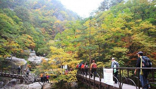 [Oct 10 - Oct 19] Odaesan Mountain Autumn Foliage Shuttle Bus One Day Tour_10