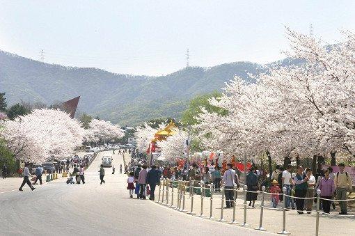 Seoul Land & Zoo Discount Ticket_5
