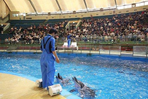 Seoul Land & Zoo Discount Ticket_19