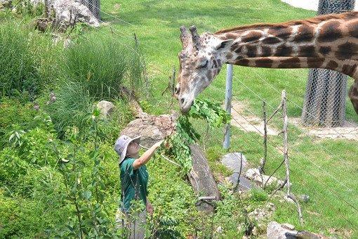 Seoul Land & Zoo Discount Ticket_16