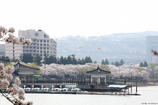 [From Busan] Gyeongju Cherry Blossom Festival One Day Tour_6