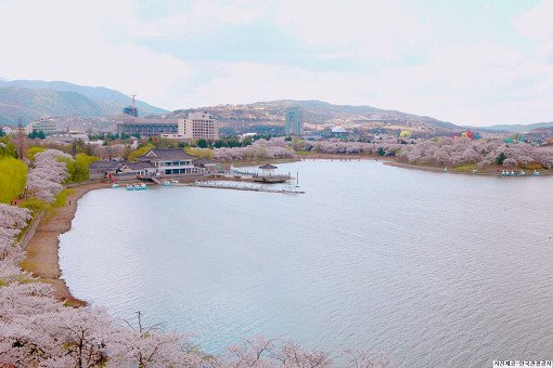 [From Busan] Gyeongju Cherry Blossom Festival One Day Tour_4