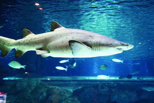 Coex Aquarium Discount Ticket_13