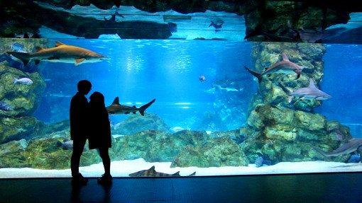 Coex Aquarium Discount Ticket_2