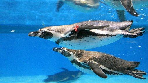 Coex Aquarium Discount Ticket_1