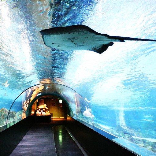 Coex Aquarium Discount Ticket_4