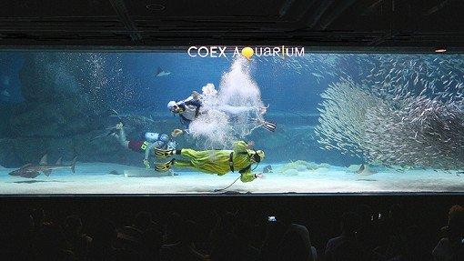 Coex Aquarium Discount Ticket_7
