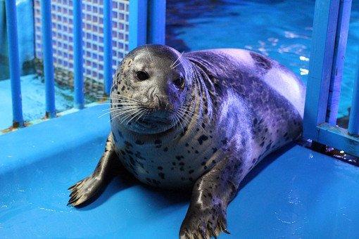 Coex Aquarium Discount Ticket_12