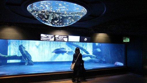 Coex Aquarium Discount Ticket_17