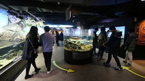 Билеты со скидкой в Аквариум Coex в Сеуле_15