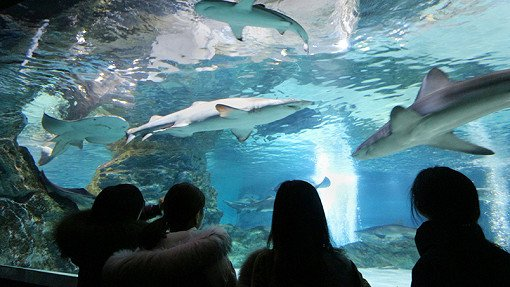 Coex Aquarium Discount Ticket_19