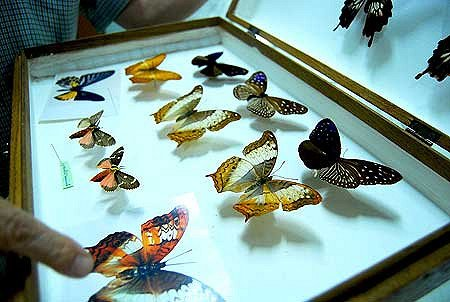 Singapore Butterfly Park and Insect Kingdom Ticket_5
