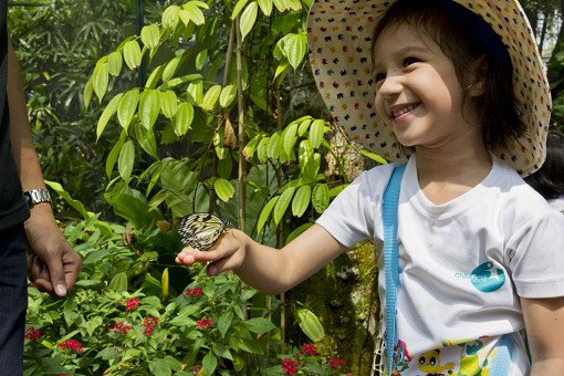 Singapore Butterfly Park and Insect Kingdom Ticket_1