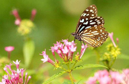 Singapore Butterfly Park and Insect Kingdom Ticket_0