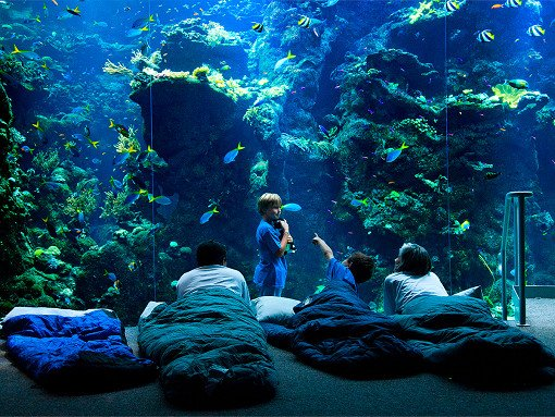 Taiwan NMMBA Aquarium Sleepover_4