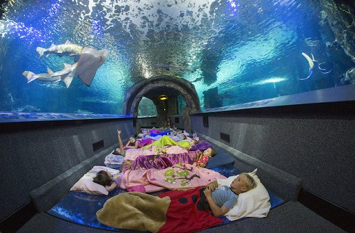 Taiwan NMMBA Aquarium Sleepover_1