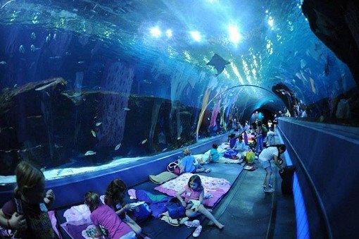 Taiwan NMMBA Aquarium Sleepover_0