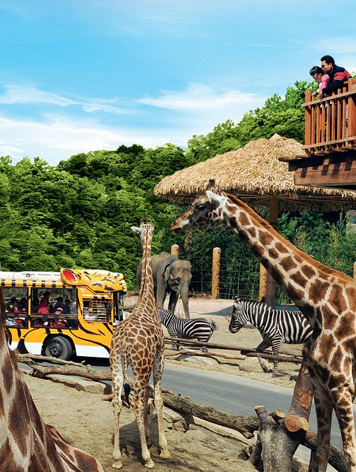 Everland & Caribbean Bay Ticket Combo and Shuttle Bus Package_4