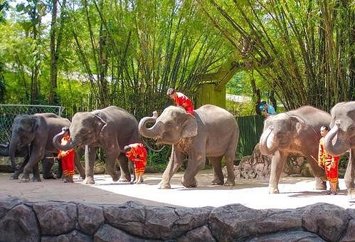 Safari World Bangkok Discount Ticket_3